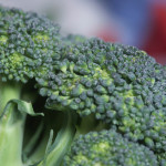 冬が旬の野菜!ブロッコリーの栄養の秘密に迫る!