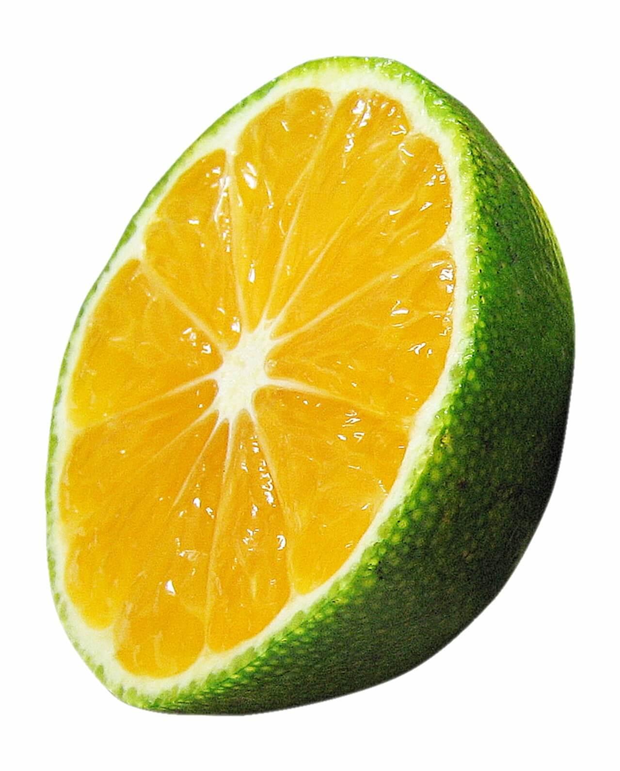 柑橘系果物の断面