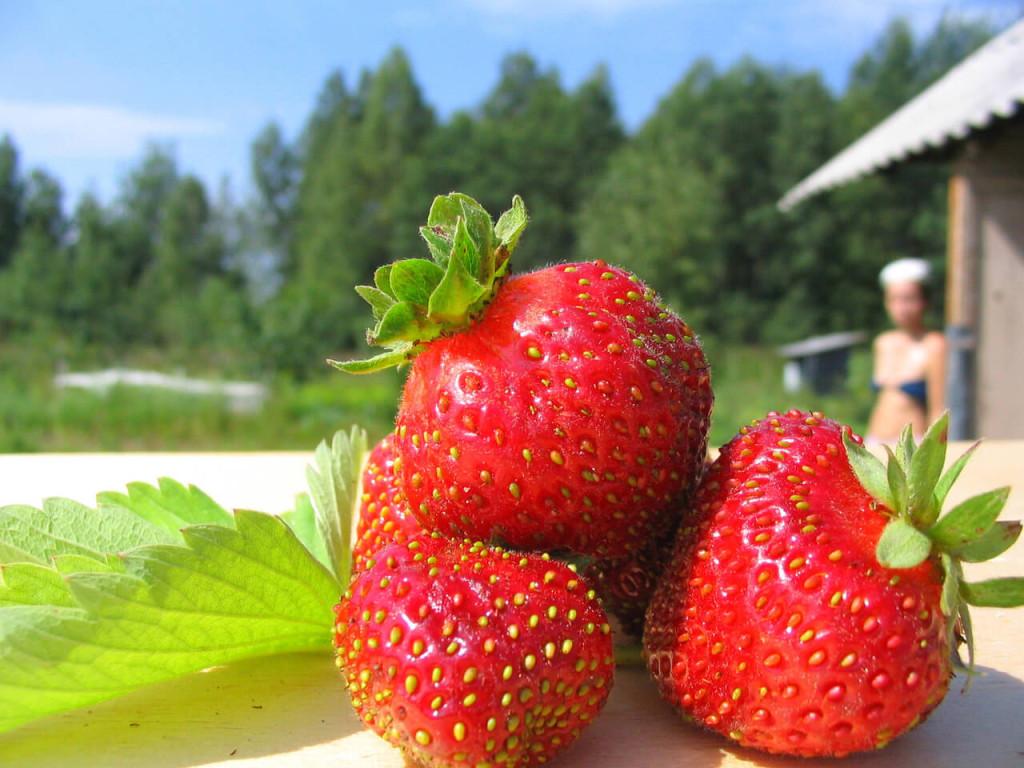 イチゴ、美容、ダイエット