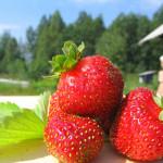 苺で美容とダイエット